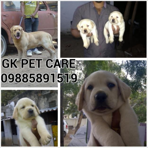 GK PET CARE & MOBILE PET SERVICES