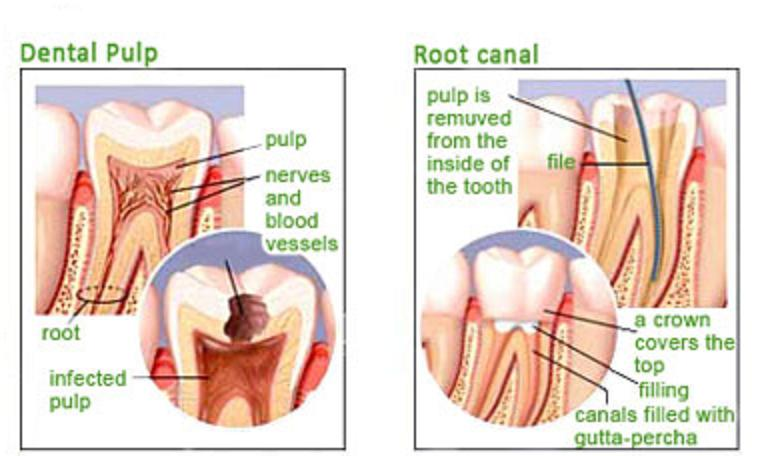Seed The Tooth Clinic