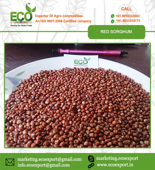 Eco Export India | Basmati Rice Supplier | Basmati Rice Exporter
