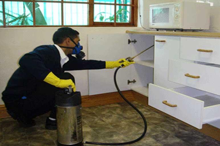 Vee Emm Pest Control | Call : 01139586932 | contact@veeemmpestcontrol.com