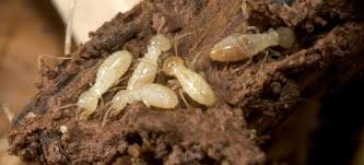 Pest Control Service In Chennai (ACME PEST CONTROL)