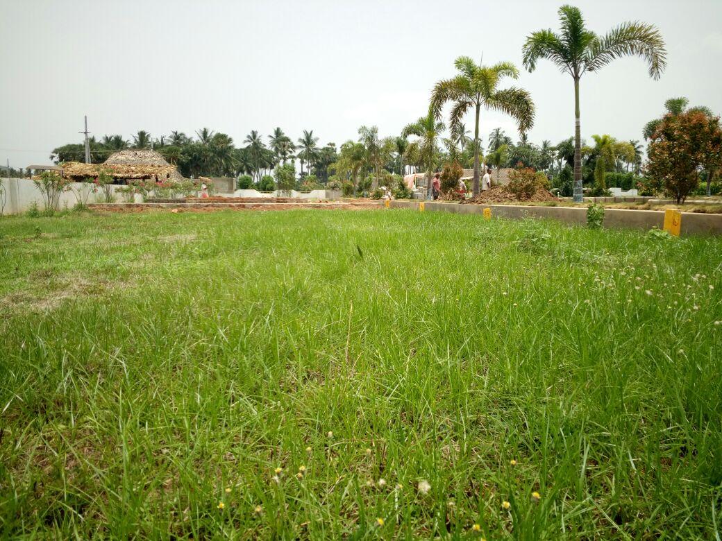 Hasini Estates And C