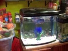 Tobbus Pet Shop & Aquarium