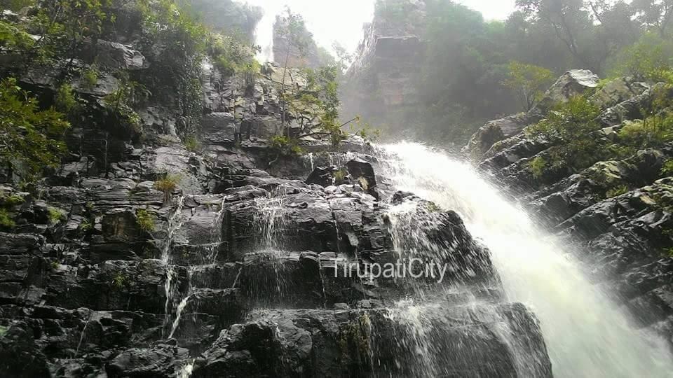 TirupatiTickets.com