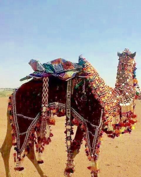 Camel Safari Dunes Camp