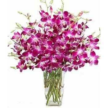 Vel Flora 9444662638