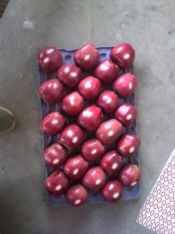 Agrive Export & Import- +91-9775023720/9748594260 OR +9133-25520322