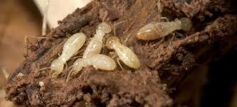 Pest Control Service in Chennai | ACME PEST CONTROL