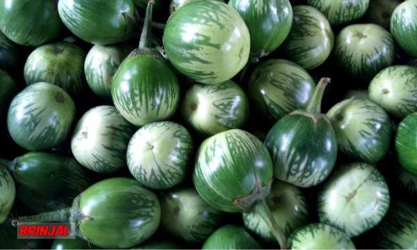 DMR Green Valley Agro Fresh P Ltd