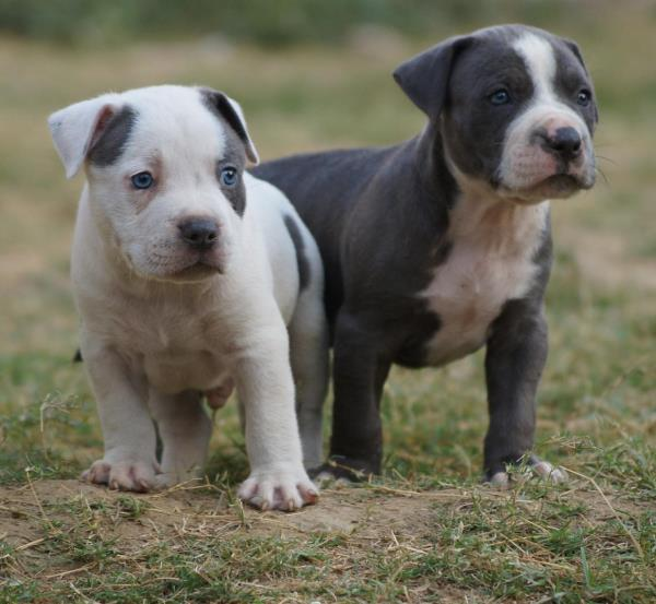 Ammu's Pets & Kennels 08071264651
