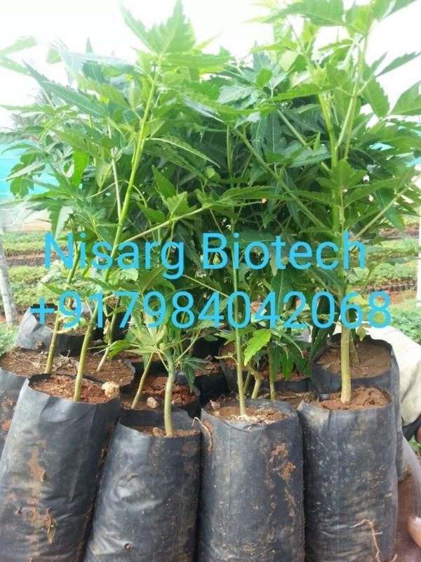 NISARG BIOTECH-7984042068